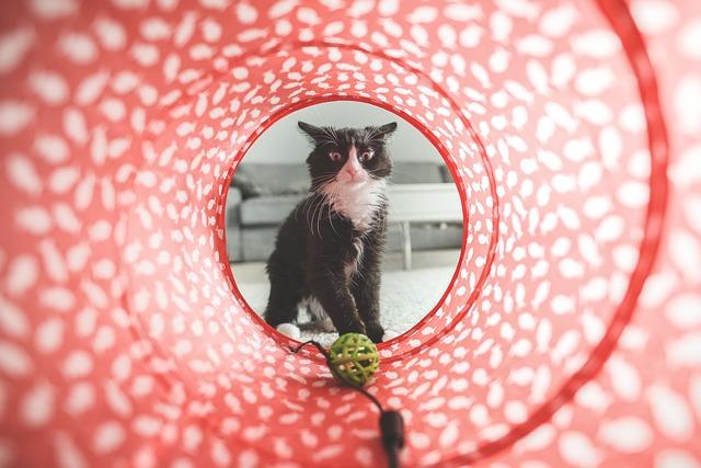 macska-jatek