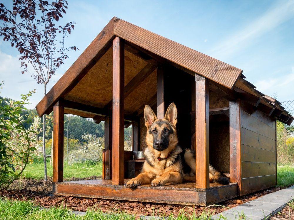 A fából készült kutyaházak strapabíróak.